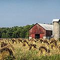 Amish Country Wheat Stacks And Barn by Kathy Clark