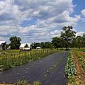 Amish Farm And Garden by Kathy Clark