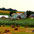 Amish Farm On Laundry Day by Desiree Paquette