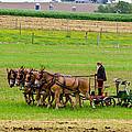 Amish Farmer by Guy Whiteley