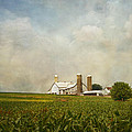 Amish Farmland by Kim Hojnacki