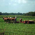 Amish Field Work by Joyce  Wasser