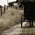 Amish Horse And Buggy by Dan Sproul