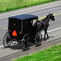 Amish Horse And Buggy In Ohio by Dan Sproul