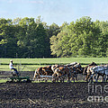 Amish Plowing Field by David Arment