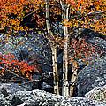 Among Boulders by Chad Dutson
