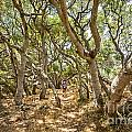 Among The Trees - The Mysterious Trees Of The Los Osos Oak Reserve by Jamie Pham