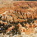 Amphitheatre At Bryce Canyon by Larry Ricker