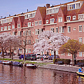 Amsterdam Canal. Pink Spring in Amsterdam