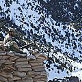 An Afghan Border Patrolman Provides by Stocktrek Images