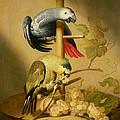 An African Grey And An Orange Winged Amazon Parrot On  A Perch With Grapes by Jacob Fransz van der Merck