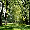 An Afternoon At Versailles  by Annie Patz