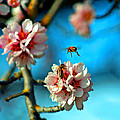 An Almond Pollen Day by Joseph Coulombe