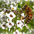 An Alyssum Meal by Heidi Manly