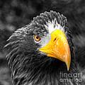 An American Eagle  by Rob Hawkins