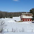 an American Frozen Pasture by Dan Hefle