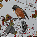 An American Robin Remembers by Diane V Bouse