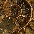 An Ancient Ammonite Pattern II by Jaroslaw Blaminsky