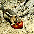 An Apple A Day by Marilyn Hunt