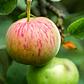 An Apple - Featured 3 by Alexander Senin