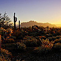 An Arizona Morning  by Saija  Lehtonen