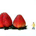 An Artist Drawing Strawberries by Paul Ge