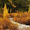 An Autum Stream In Colorado by Jeff Swan