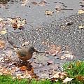 An Autumn Bath by Guy Ricketts