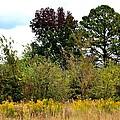 An Autumn Day In Alabama by Maria Urso
