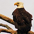 An Eagle's Perch by Polly Peacock