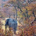An Elephant Making Its Way by David Santiago Garcia
