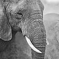 An Elephant Never Forgets by Paul W Sharpe Aka Wizard of Wonders