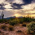 An Evening In The Desert  by Saija  Lehtonen