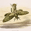 An Evening Ride, Illustration From In by Richard Doyle