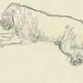 An Illustration Of A Dog by Carl Oscar August Erickson