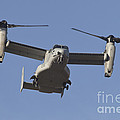 An Mv-22b Osprey Prepares For Landing by Timm Ziegenthaler