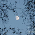 An October Moon by Neal Eslinger