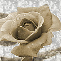 An Old Fashion Rose by Donna Brown
