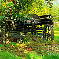 An Old Harvest Wagon by Jeff Swan
