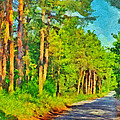 An Old Logging Road In Sleeping Bear Dunes National Lakeshore by Digital Photographic Arts