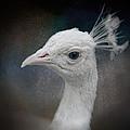 An Old Soul - White Peacock - Wildlife by Jai Johnson