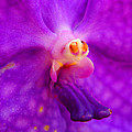 An Orchid's Delicates by Kaleidoscopik Photography