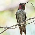 Ana Hummingbird by Michael Moriarty