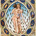Anatomical Man by Granger