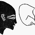 Anatomy: Human Cranium by Granger