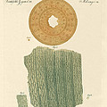 Anatomy Of A Straw by Splendid Art Prints