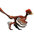 Anchiornis Feathered Dinosaur, Artwork by Science Photo Library
