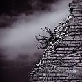 Ancient Crumbled Wall by Silvia Ganora