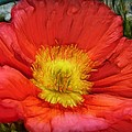 Ancient Flower 4 - Poppy by Lilia D