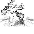 Ancient Loblolly Pine Ocracoke Nc 1970s by Richard Wambach